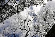 Bands of overhead branches. Waimea Valley, Oahu, Hawaii