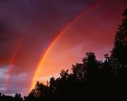 Double rainbow over birch forest, Matanuska Valley, Alaska.