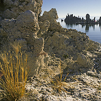 MONO LAKE, CALIFORNIA. Salt resistent grass grows in alkaline soil by south shoreline tufa towers, photographed in 1988, when lake was near its lowest ebb due to Los Angeles water diversions. After a court ruling, diversions were reduced and these towers are now submerged again.