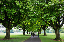 Cardiff, UK. 1st May, 2017. A path leads through trees in Llandaff Fields.