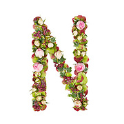 Capital Letter N Part of a set of letters, Numbers and symbols of the Alphabet made with flowers, branches and leaves on white background