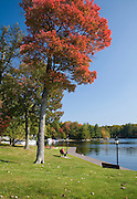 Red Maple tree in park by lake in Old Forge.