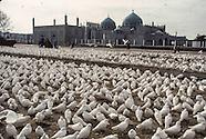 1998 Afghanistan. Daily life under the communist regime. AFG491