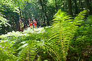 Hiking Deep into the Old Growth Forest of Hainich National Park, Thuringen, Germany