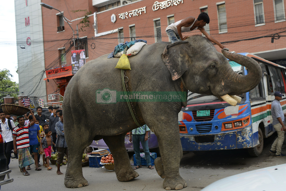 August 7, 2017 - Dhaka, Bangladesh - A Bangladeshi manride on his elephant through a street at Kawranbazar in Dhaka, Bangladesh on August 07, 2017. Estimates say there are about 200 wild elephants left in Bangladesh. Mostly in the border areas with Myanmar and India. Some 100 domesticated are used mainly in the logging industry and several circuses. To see an elephant roam in the street of Dhaka city is a rarity. (Credit Image: © Syed Mahamudur Rahman/NurPhoto via ZUMA Press)