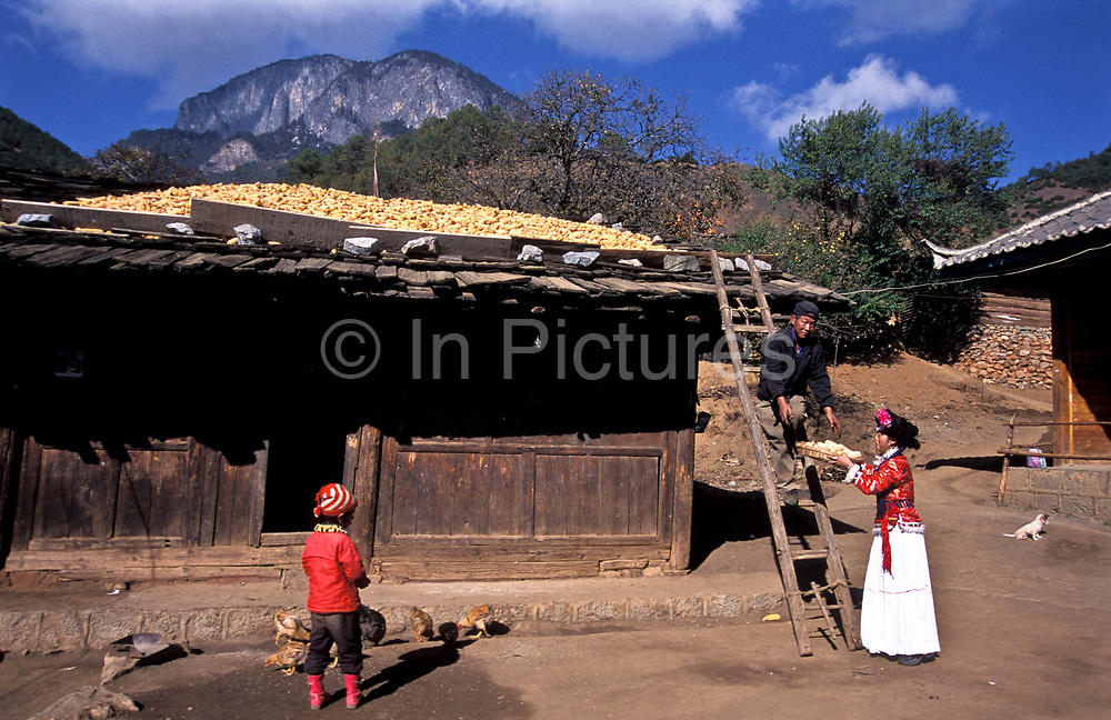 """Mu Ze Latso working in  the family's courtyard with mother and father and a neighbour's child, close to  Lugu lake, northwest Yunnan province.<br /> <br /> Mo Suo people live along LuGu lake, northwest  Yunnan province. Since the population is not big enough, the Chinese government did not assign them as an independent minority. Mo Suo people belongs to the NaXi minority of LiJiang region. Mo Suo people have their own distinctive culture, religion and customs. Most significantly: Mo Suo people do not have a marriage System. Locally, they call their relationships a """"walking marriage"""". <br /> A girl has her ADULT ceremony when she is 14, then she can start to wear the Mo Su costume and the family will give her a room that is called """"Flower room"""".<br /> Logically, she is allowed to take her boyfriend, since Mo Su family carries on by the mother's name, the son and the daughter stay with mother their whole lifes.<br /> When they are adults, the girl chooses her boyfriend. The boyfriend come to sleep in her room in the evening and leave for his mother's home in the morning. He belongs to his mother's family. She belongs to her mother's family, her children will be taken care of by her family: her mother, uncle, aunts, or sisters and brothers. Her children do not belongs to the boyfriend's family.<br /> Normally, the mother will pass her """"power"""" to her eldest daughter when she is old and thus perpetuate the Mo Suo traditions."""