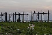 A dog walks in the brush below the famous U Bein Bridge, Myanmar.