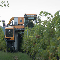 Machine harvests grape at the Hilltop Wine House near Neszmely, Hungary on Sept. 13, 2018. ATTILA VOLGYI