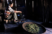 """A Hua 23, after having picked the tea leaves scorches them in a large """"wok"""" to remove moisture and excess water before being put out to dry. This process is known as sha qing (kill the green),  Zha Lu village, Yunnan province bordering Myanmar and Laos. She together with her husband and parents tend to 2.3 acres of tea plantations which earn them U$S 1300 / year. In the steamy subtropical climate they are able to harvest tea leaves all year round except for December and January. They grow the highly prized Pu'er variety of tea."""