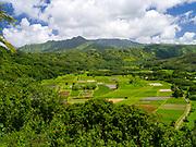 View of taro paddies in the Hanalei Valley, near Princeville, Kauai, Hawaii, US.