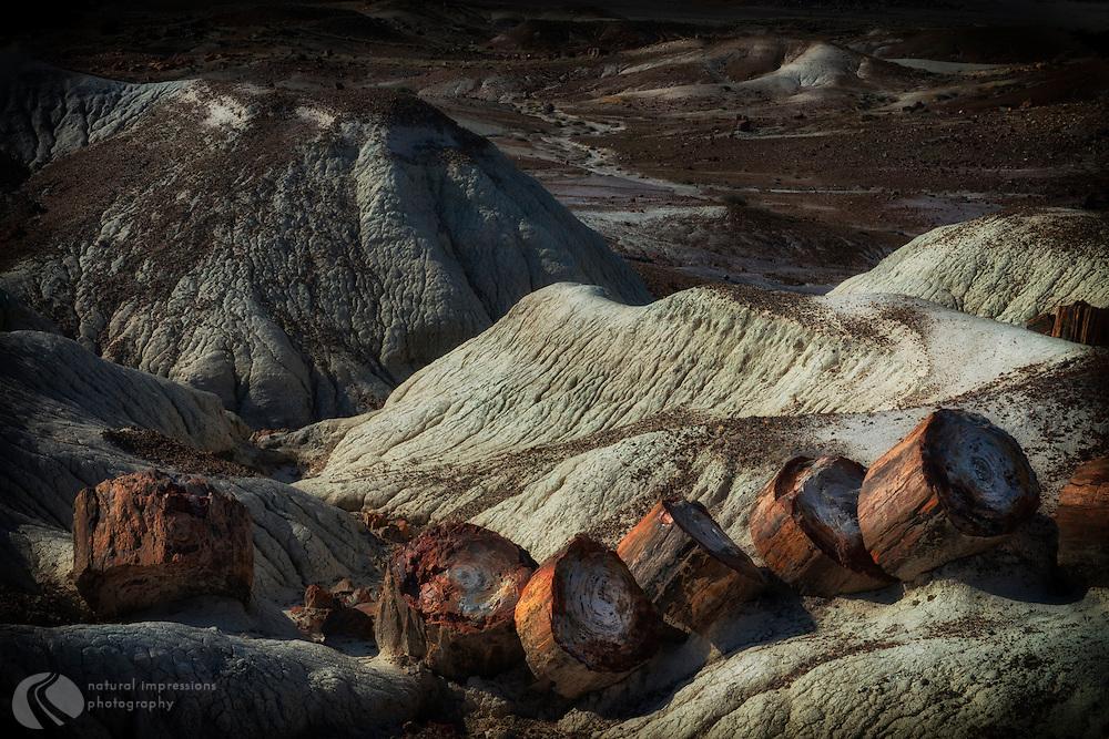 Petrified FOrest National Park, Petrified Forest NP, landscape