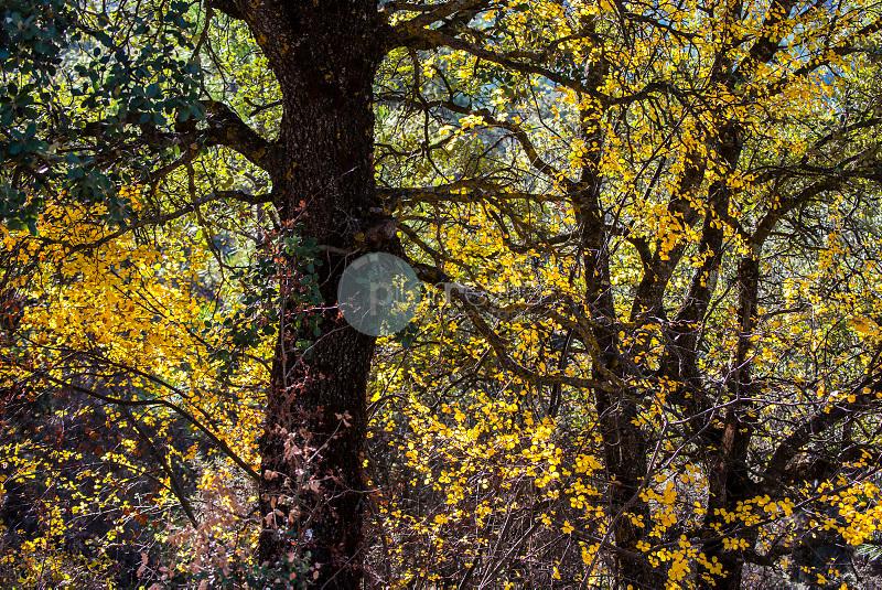 Arboles en otoño. Cañizares. Serranía de Cuenca. Cuenca ©ANTONIO REAL HURTADO / PILAR REVILLA