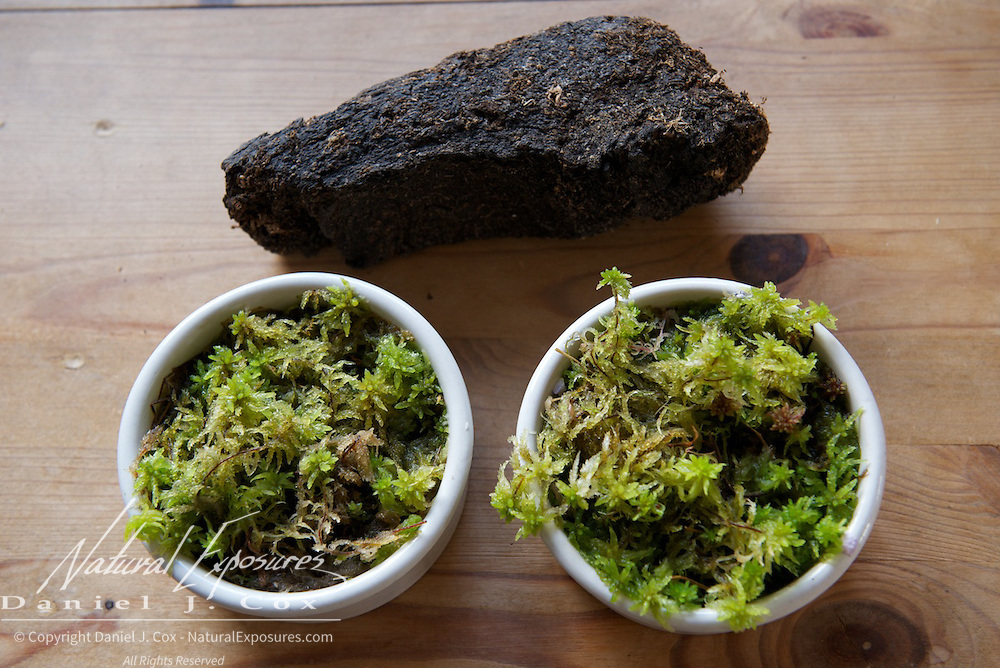 Peat products, live peat and dried peat. Ireland.