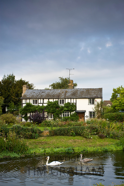 Quaint Tudor style cottage with swan and cygnet on River Arrow at Eardisland, Herefordshire, UK