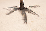 The shadow of a single palm tree on the day of Lahaina Noon in Hawaii