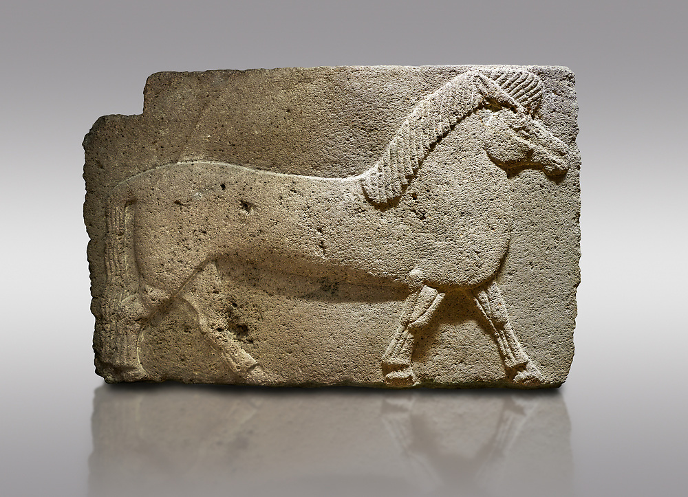 Pictures & images of Phrygian relief sculpted orthostat stone panel. Andesite, Kucukevler, Ankara., 1200-700 B.C. Walking horse. Muscles in the legs of the figure are schematic. Anatolian Civilisations Museum, Ankara, Turkey<br /> <br /> Against a gray background. .<br /> <br /> If you prefer you can also buy from our ALAMY PHOTO LIBRARY  Collection visit : https://www.alamy.com/portfolio/paul-williams-funkystock/phrygian-antiquities.html  - Type into the LOWER SEARCH WITHIN GALLERY box to refine search by adding background colour, place, museum etc<br /> <br /> Visit our CLASSICAL WORLD PHOTO COLLECTIONS for more photos to download or buy as wall art prints https://funkystock.photoshelter.com/gallery-collection/Classical-Era-Historic-Sites-Archaeological-Sites-Pictures-Images/C0000g4bSGiDL9rw
