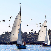 A flock of birds fly past the jetty as three groups of mariners maneuver their crafts around the mouth of the Santa Cruz Harbor. Photo by Shmuel Thaler <br /> shmuel_thaler@yahoo.com www.shmuelthaler.com