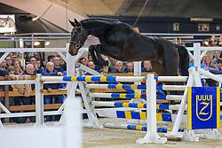 040, Alexia Bormes Rm Z<br /> Jumping Mechelen 2019<br /> © Hippo Foto - Martin Tandt<br />  27/12/2019