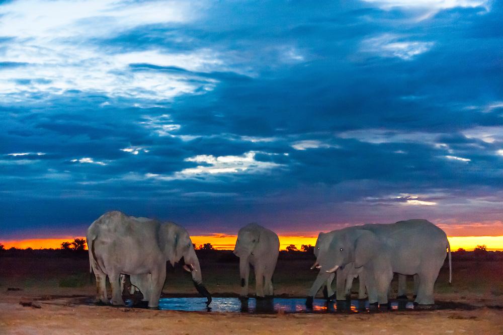 Herd of elephants at a watering hole at twiight, Nxai Pan National Park, Botswana.