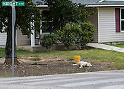 A potentially dangerous dog is chained to a tree outside a home in the 5400 block of Haight, which is directly across the street from B.C. Elmore Elementary. The dog could become aggressive while children are walking by, and that chain is not a safe barrier between the dog and the students.