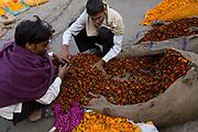 Men sorting flowers at the Jantar market, Jaipur, India