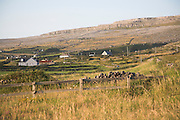 Small scattered farmhouses, rural landscape of the Burren, Fanore, County Clare, Ireland