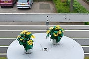 plastic flowers on balcony table