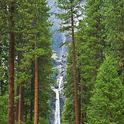 Waterfall and pine trees. Yosemite Natl. Park. California, USA.