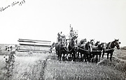 many workhorses pulling a wheat harvesting machine 1937 Blanca Chica Argentina