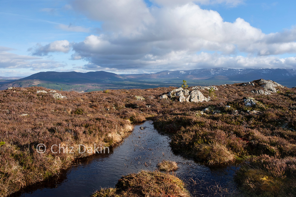 View from Craigellachie, near Aviemore