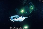 manta ray, Mobula alfredi, formerly Manta birostris, feeding at night on plankton attracted by the lights of a dive boat, the Kona Agressor II, Kona, Big Island, Hawaii ( Central Pacific Ocean )