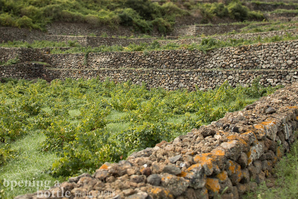 The stone terraces of Pantelleria are used for viticulture and the farming of capers.