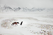 Fighting his way through a gale, Ooroon Boi looks for water for his horse on his way down to the lower Wakhan valley.