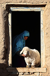 Khadija 37 releases sheep from their stable, she received training as part of NCA's Empowerment of Women Project, Chaprasak village,  Shahrestan, Daikundi Province, Afghanistan.