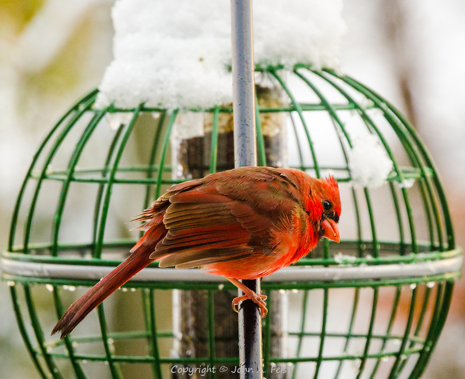 """Shortly after a snow storm, he's sitting next to a feeder letting one of his friends have a """"bite"""". I love the color on these birds and also the apparent expressions on their faces."""