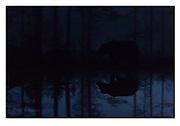 Midnight brown bear. Kuikka, eastern Finland. Nikon D4, 70-200mm @ 180mm, f2.8, 1/10sec, ISO5000, Manual modus