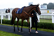 Archdeacon ridden by George Downing trained by Dean Ivory - Mandatory by-line: Robbie Stephenson/JMP - 19/08/2020 - HORSE RACING - Bath Racecourse - Bath, England - Bath Races