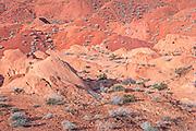 Desert Tapestry, Valley of Fire, Nevada