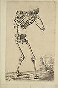 """Male full body back skeleton woodcut print at the opening of the Human Anatomy book """"Notomie di Titiano"""" Printed in Italy in 1670"""