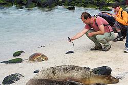 Visitor Photographing Green Sea Turtle, San Cristóbal
