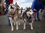 Two American huskies show their spirit in the eighth annual Veterans Day Parade in Folsom, CA on November 12, 2007.