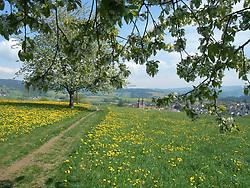 Germany, Sankt Peter (Black Forest) -  April 28, 2018.Landscape with dandelion fields. (Credit Image: © Antonio Pisacreta/Ropi via ZUMA Press)
