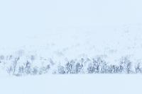 Whiteout Norwegian winter landscape
