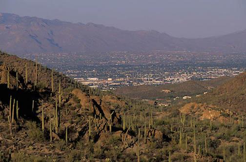 Saguaro National Park, Giant Saguaro Cactus forest.(Carnegiea gigantea) City of Tucson at edge of the park's boundary. Arizona.