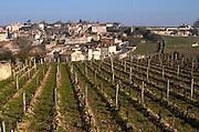 Vineyard. Chateau Ausone, Saint Emilion, Bordeax, France