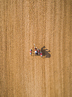 Aerial view of a group of camels during a race in the desert of Ras Al Khaimah, U.A.E.