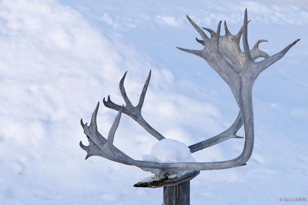 Kautokeino, Finnmark, Norway, Europe
