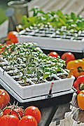Gardener's Supply Company seed starting trays