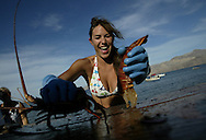 Emily Von Mourick rips apart a lobster tail that will soon be eaten for dinner during the Marine Ecology class field trip to Las Animas, Mexico Monday May 17, 2004.