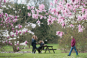 © Licensed to London News Pictures. 17/03/2014. Kew, UK People sit amongst the magnolia trees. People enjoy the occasional sunshine at Kew Gardens today 17th March 2014. Photo credit : Stephen Simpson/LNP